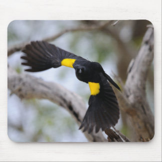 Yellow-shouldered Blackbird in Flight Mousepads
