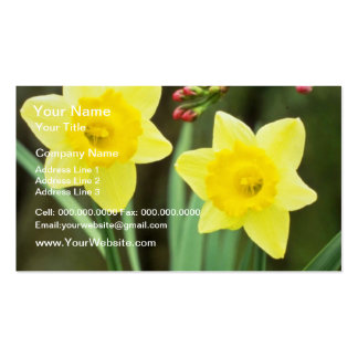 yellow Small-cupped Narcissi, 'Baby Doll' flowers Business Card Templates