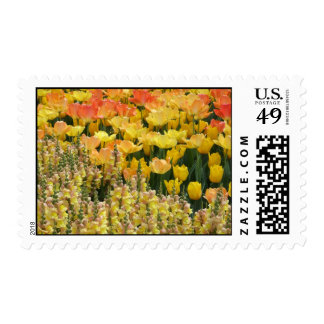 Yellow Snapdragons Postage Stamp