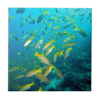 Yellow snapper fish on coral reef ceramic tile