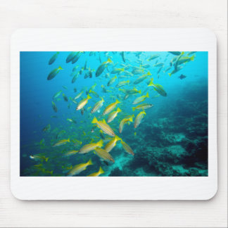 Yellow snapper fish on coral reef mouse pad