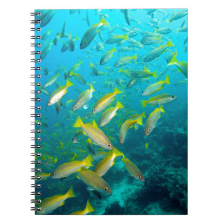 Yellow snapper fish on coral reef spiral notebooks