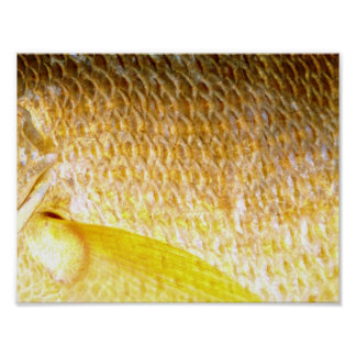 Yellow snapper scales | poster