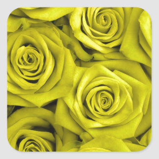 Yellow Spectacular Roses Square Sticker