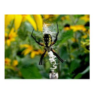 Yellow Spider Postcards