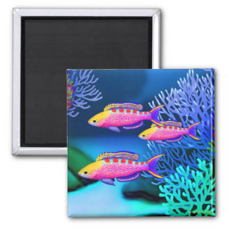 Yellow Spotted Anthias Coral Reef Fish Magnet