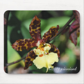 Yellow Spotted Orchid from Gardenfest 2011 Mouse Pad