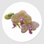 Yellow Spotted Orchid Stickers