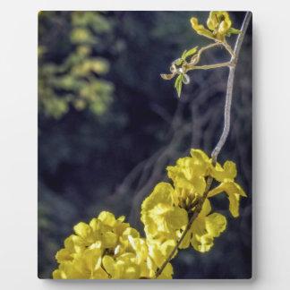 Yellow Spring Bloom Photo Plaque
