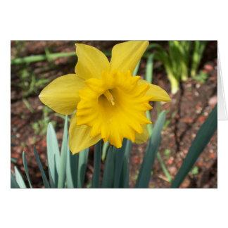 Yellow Spring Daffodil Card