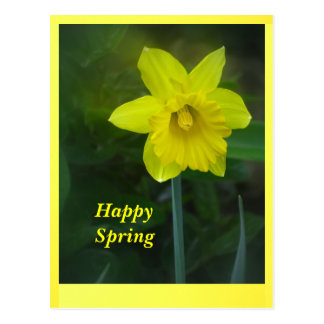 Yellow Spring Daffodil Flower Postcard