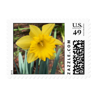 Yellow Spring Daffodil Stamp