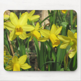 Yellow Spring Daffodils Mouse Pad