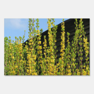 yellow spring flower and old wood wall sign