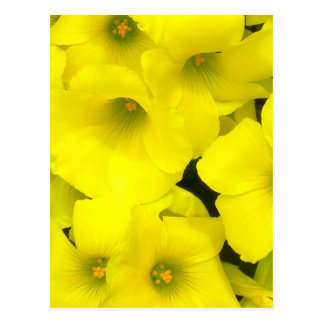 Yellow spring flowers in the garden postcard