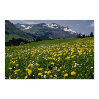 yellow Spring in the mountain flowers Poster