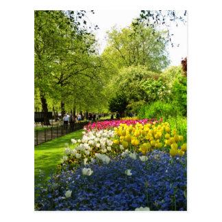 Yellow St. James Park, London, England flowers Postcard