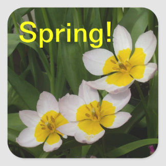 Yellow Stained Tulips Square Sticker