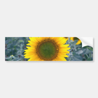 yellow Stand out from the crowd flowers Bumper Stickers