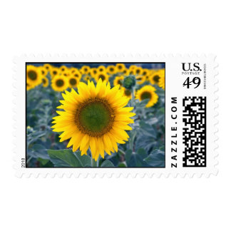 yellow Stand out from the crowd flowers Stamp