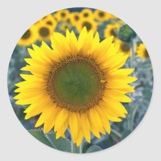 yellow Stand out from the crowd flowers Classic Round Sticker