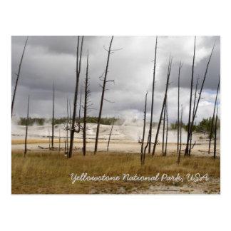 Yellow Stone National Park Postcard