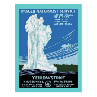 Yellow Stone Park - Old Faithful Geyser Postcard