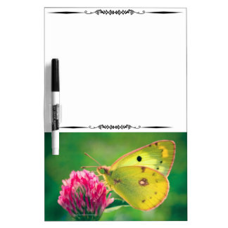 Yellow Sulpher Butterfly Decorative DryEraseBoard Dry-Erase Board
