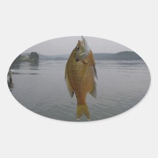 Yellow sun fish at Lake ArowwHead Oval Sticker