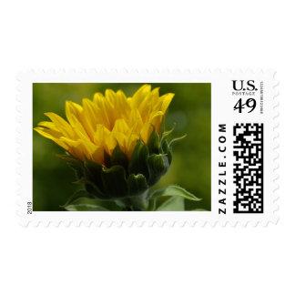 Yellow Sun Flower Postage Stamp
