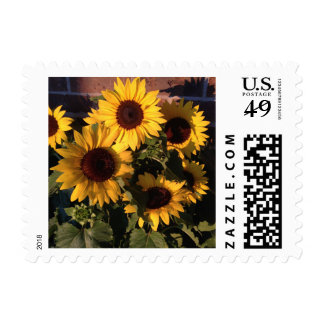 Yellow Sun Flowers Small Postage Stamps