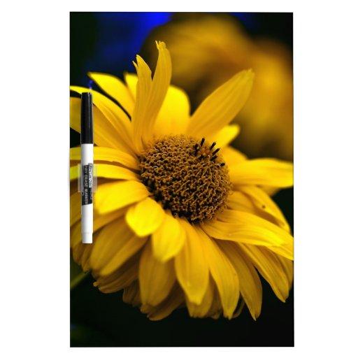 Yellow Sun Hat Echinacea Flower Dry-Erase Whiteboard