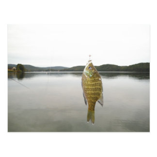 Yellow sunfish at Lake Arrowhead Postcard