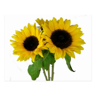 Yellow Sunflower Blank Floral Postcard