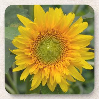 Yellow Sunflower Drink Coasters