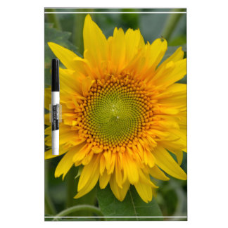 Yellow Sunflower Dry Erase Whiteboard