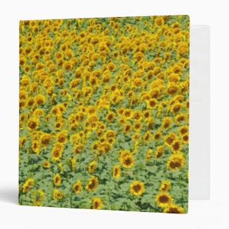 Yellow Sunflower Field 3 Ring Binder