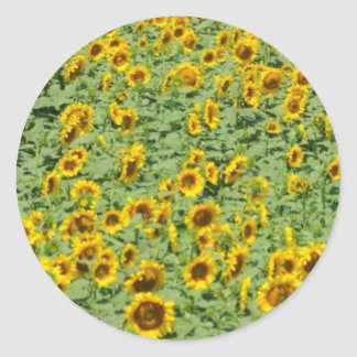 Yellow Sunflower Field Classic Round Sticker