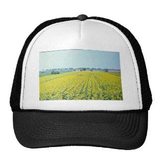 yellow Sunflower field in eastern Croatia flowers Hat