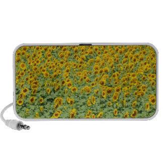 Yellow Sunflower Field Speaker