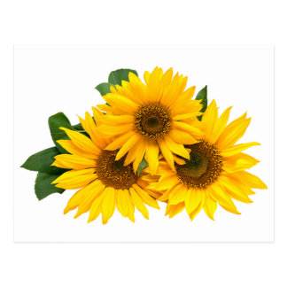 Yellow Sunflower Floral Blank Post Card