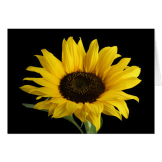 Yellow Sunflower Flower Hello Love Thinking of You Card