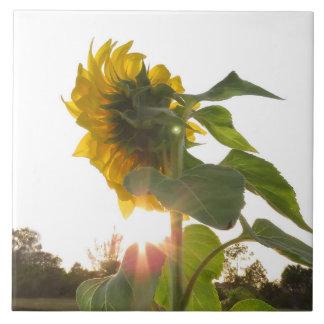 Yellow Sunflower Flower Spiegeland Tile