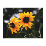 Yellow Sunflower Photo Gallery Wrap Canvas