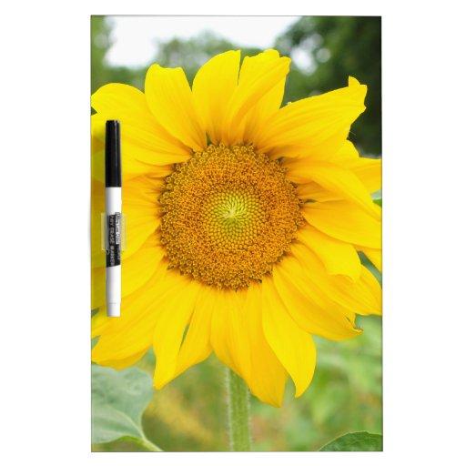 Yellow Sunflower Sun Flower Dry Erase Whiteboards