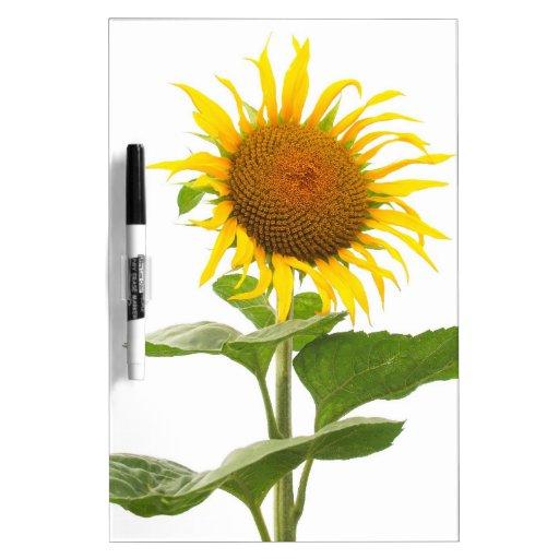 Yellow Sunflower Sun Flower Dry-Erase Board