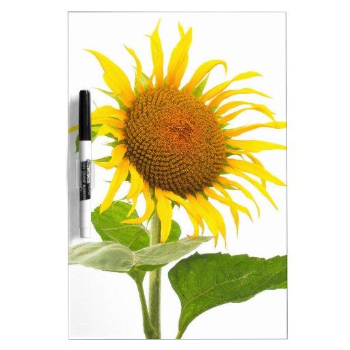 Yellow Sunflower Sun Flower Isolated Dry Erase Whiteboards