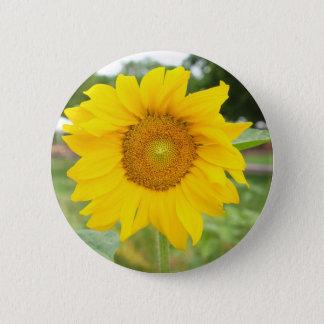 Yellow Sunflower Sun Flower Pinback Button