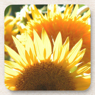 Yellow Sunflowers Drink Coasters