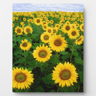 Yellow Sunflowers Plaques